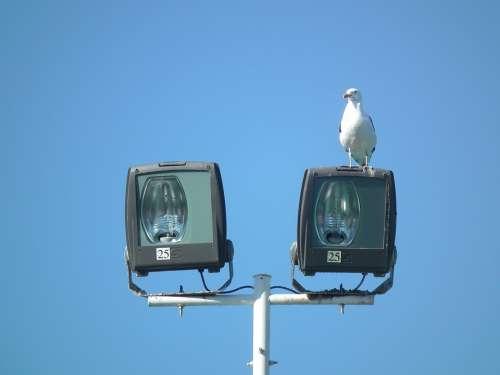 Sky Ave Animals Seagulls