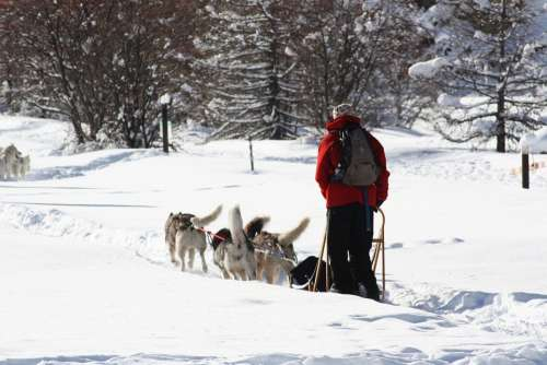 Sled Dogs Queiras Snow Nature Winter