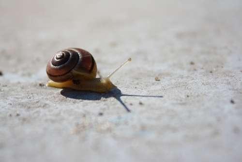 Snail Concrete Animal Animal World Mucus Nature