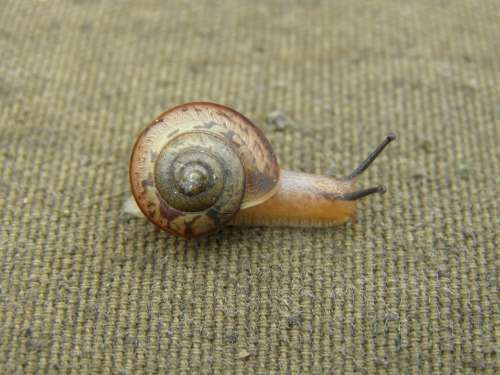 Snail Summer Nature Biology Macro