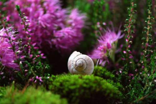 Snail Shell Mollusk Close Up Snail Shell Slowly