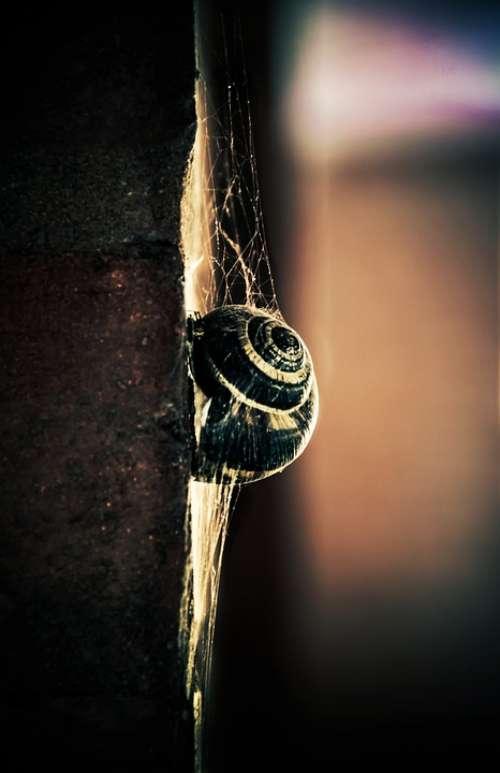 Snail Light Colors Wall