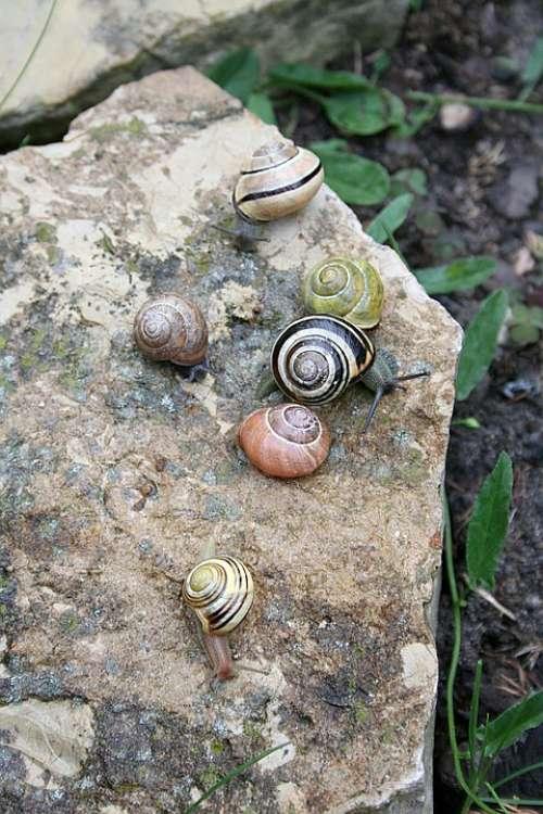 Snails Seashell Rain Garden Spring Snail Animals