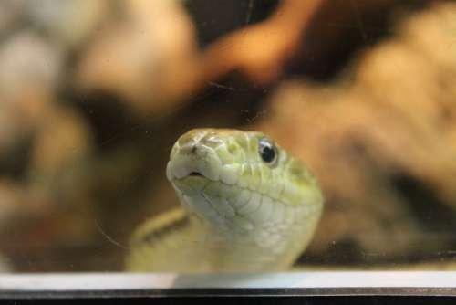 Snake Zoo Reptile Green Nature Wild Dangerous