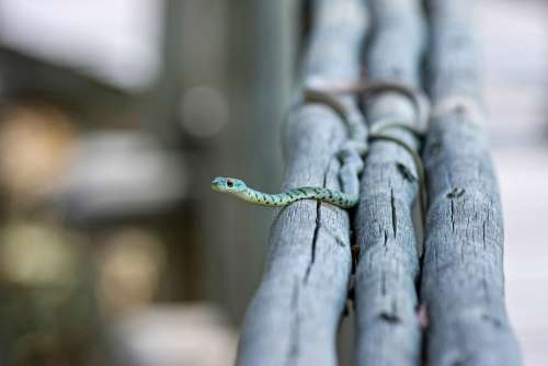 Snake Animal Nature Toxic Aggressive