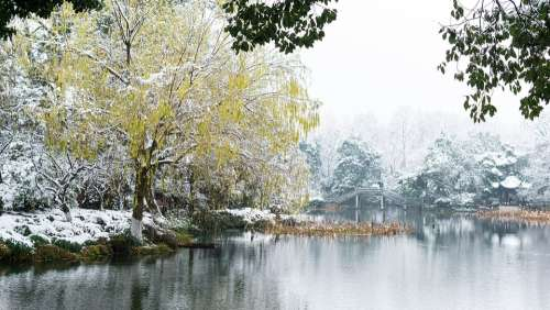 Snow The Scenery Park Lake West Lake Hangzhou