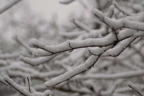 Snow Tree Branches Nature Trees Winter Landscape