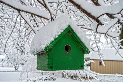 Snow Winter Contrast Bird Birdhouse Bird House