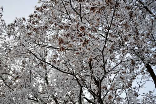 Snow Winter Forest Tree