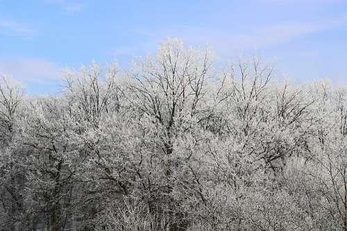 Snow Landscape Frost Tree Season White Nature
