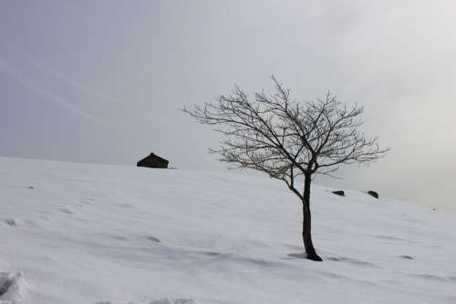 Snow Winter Scenery Nature Cattle Ranch