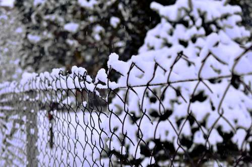 Snow Fence Winter Nature Frost Outdoors White