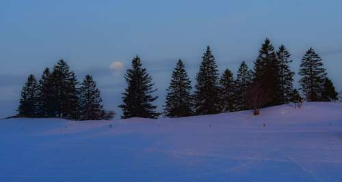 Snow Moon Trees Fir Landscape Aurora Winter Cold