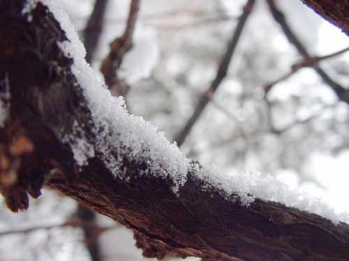 Snow Branch Snowflakes Cold Frost Winter