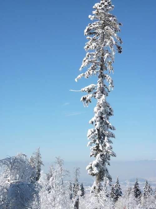 Snow Tree Winter Wintry Fir Tree Cold Winter Mood