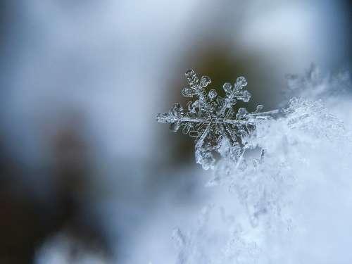 Snowflake Snow Crystal Snow Crystal Cold Macro
