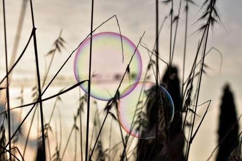 Soap Bubble Backlighting Mood Shimmer