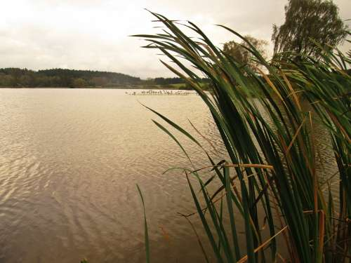 South Bohemia Lake Reeds