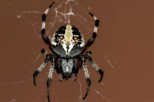 Spider Insect Macro Nature Outside Cobweb