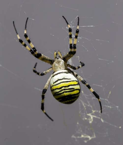 Spider Arachnid Nature Hairy Terrifying