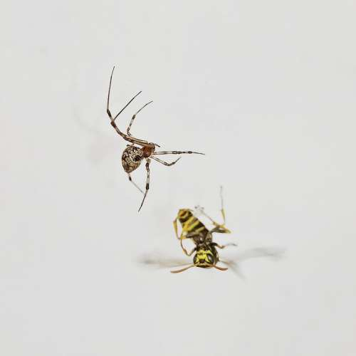 Spider Insect Nature Animal Animal World Of