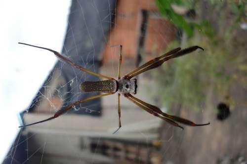 Spider Web Nature Horrifying Halloween Trap