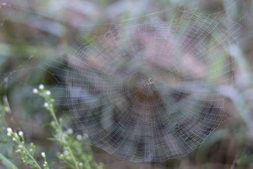 Spider Web Dew Cobweb Morning