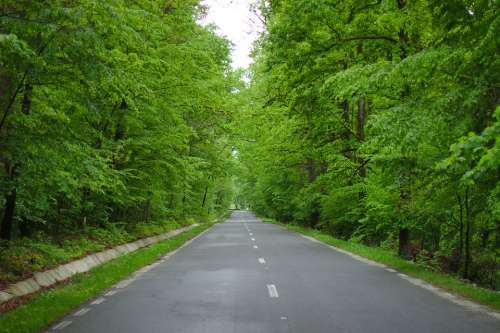 Spring Nature Road Green