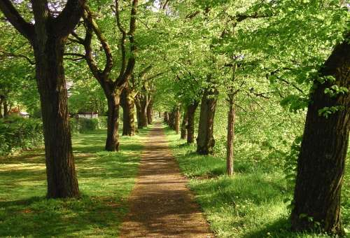 Spring Avenue Trees