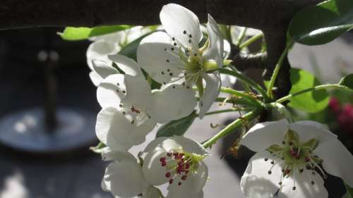 Spring Spring Flower Blossom Spring Flowers Garden