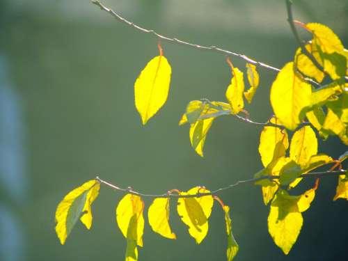 Spring Autumn Leaves Light