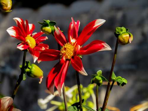 Spring Flower Spring Flower Marguerite Macro