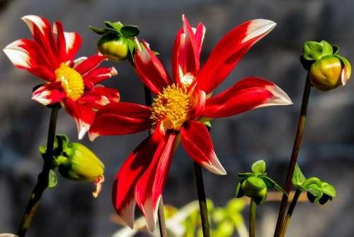 Spring Flower Spring Flower Macro Nature Blossom