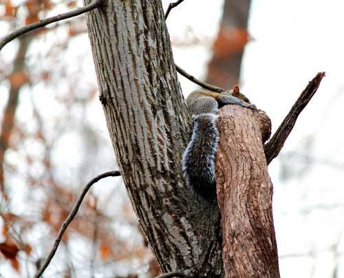 Squirrel Nature Animal Furry Tree Mammal Small
