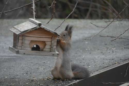 Squirrel Birdhouse Hungry Outdoor Animal