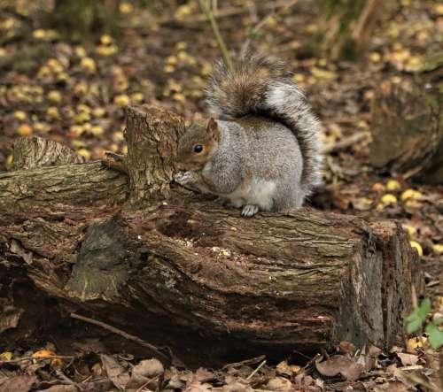 Squirrel Feeding Nature Forest Wildlife Cute