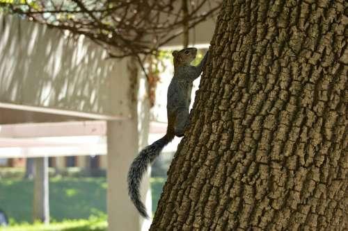 Squirrel Tree Nature Guadalajara Mexico Day