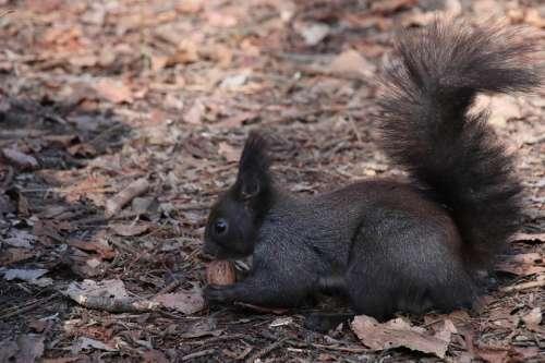 Squirrel Animals Furry Nature Foraging