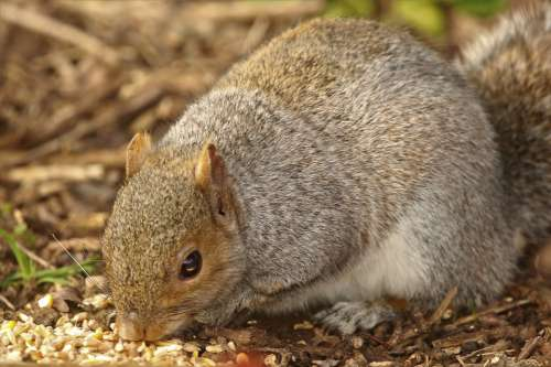 Squirrel Rodent Nature Wildlife Animal Cute