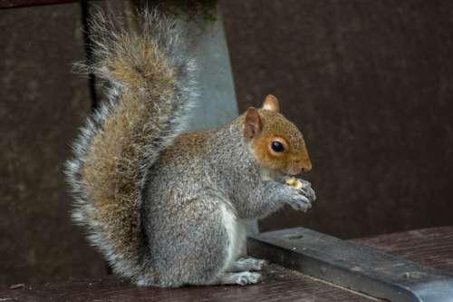 Squirrel Animal Rodent Nature Cute Wildlife Park
