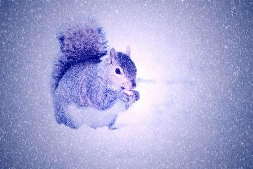 Squirrel Winter Snow Light
