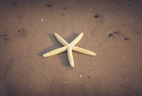 Starfish Sand Beach Beach Sand Animal Marine