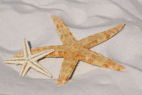 Starfish Sand Beach Sea Water Lake Bodnar Bank