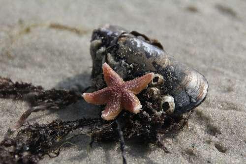 Starfish Shell Tang Vacations Beach Sand Summer