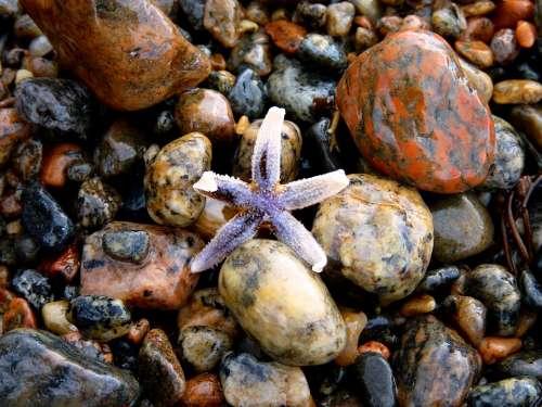 Starfish Stones Colorful Beach Sea Color Pebble
