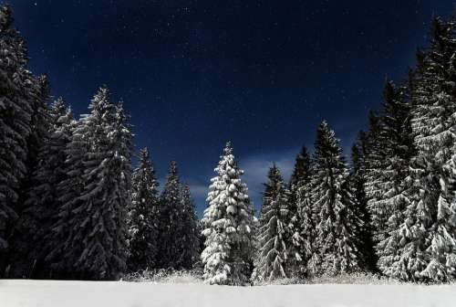 Starry Night Pine Trees Snow Landscape Winter