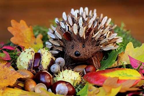 Still Life Hedgehog Decoration Herbstdeko Colorful