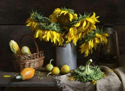 Still Life Sunflower Bouquet Flowers Autumn Fall
