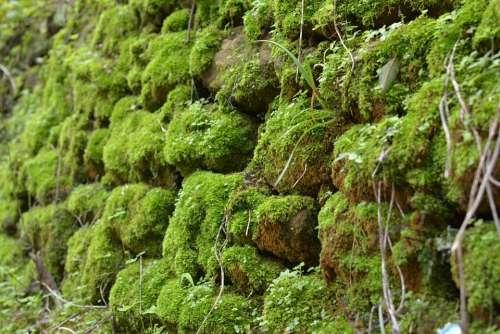 Stone Wall Moss Wall Texture Green Rock Nature