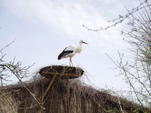 Stork Nest Horst Roof Animal Bird Storchennest